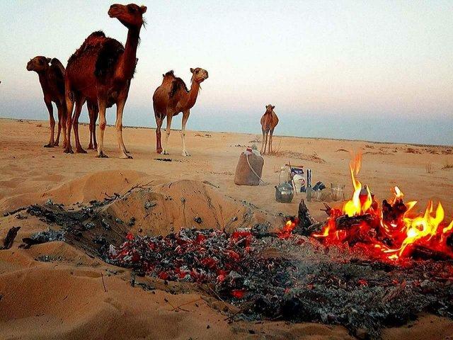 الجمر والشاي والجمال ..بيئة صحراوية فاتنة الجمال