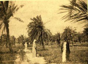 احدى مزارع الكويت قديما