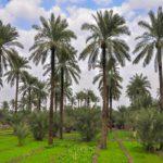 أملاك الكويتيين في العراق بين الترقب والغموض