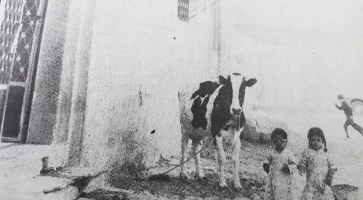 """يعد حوش الغنم """" المواشي"""" في بيوتنا القديمة بمثابة الأمن الغذائي"""