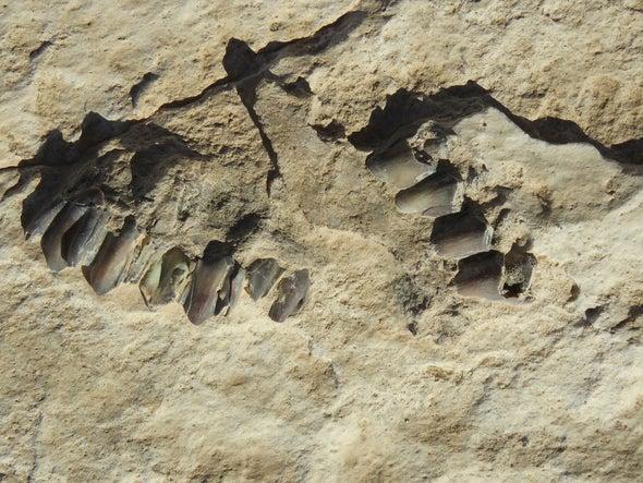 اكتشاف آثار أقدام تعود إلى 120 ألف سنة في السعودية