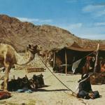 آداب شرب القهوة ورفضها وهز الفنجان عند البدو