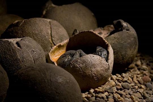 بيض متحجر لديناصورات عاشت في العهد الطباشيري بالصين
