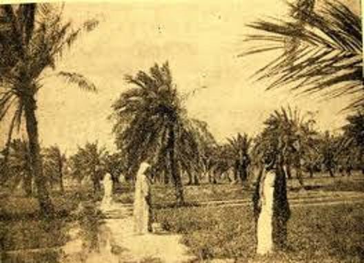 مزارع قرية الجهراء في حقبة ماضية