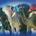 Read more about the article فهرس كتب الرحلات إلى الخليج العربي والعالم العربي وإلإسلامي